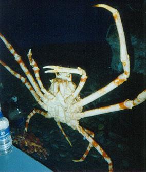 aquarium-crab.jpg