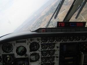 medfly_2008_17